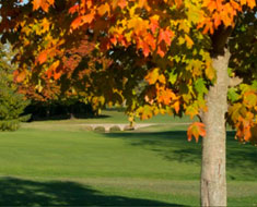 Spring Valley Golf Club – Website Design